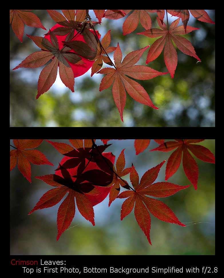 Crimson-Leaves-First-Simple-Jimagesdotcom