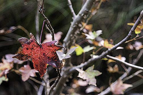 Leaf Impression A