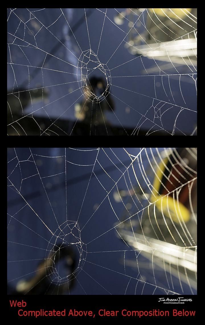 Spider-Web-Complicated-Clear-Jim-Austin-Jimagesdotcom-01