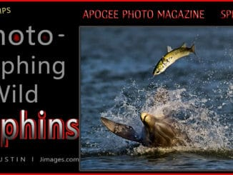 dolphin photography